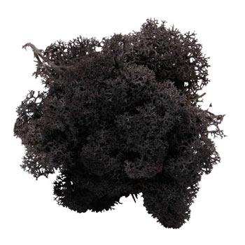 Black mos