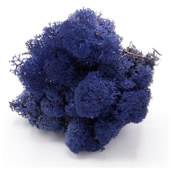 Classic-Blue mos