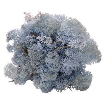 Ice Blue mos