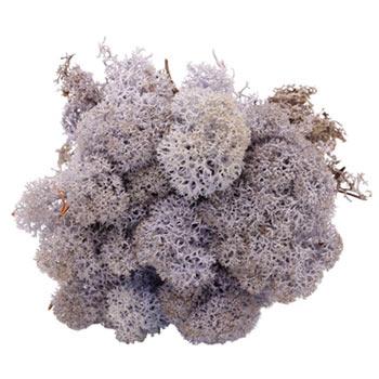 Lavendel mos