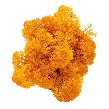 Oranje mos