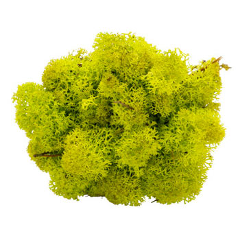 Spring-Groen mos