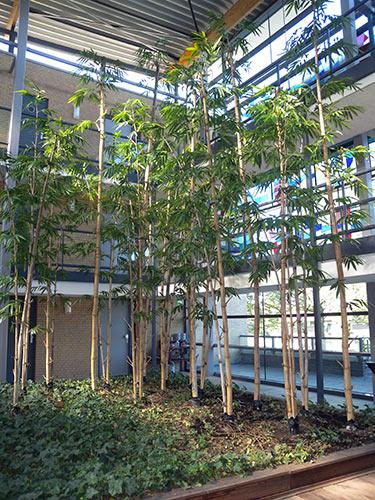 Kunst bamboe bomen