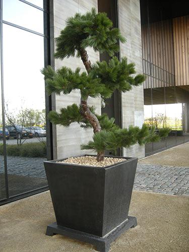 Kunst bonsai bomen