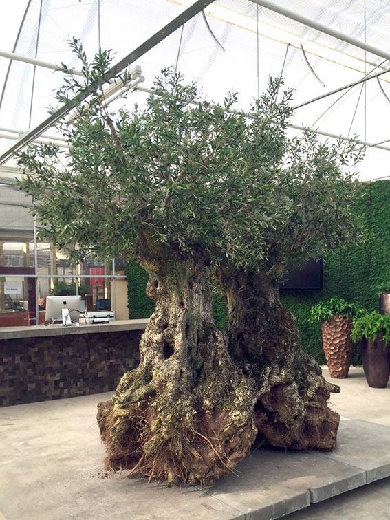 Onderhoud kunstbomen